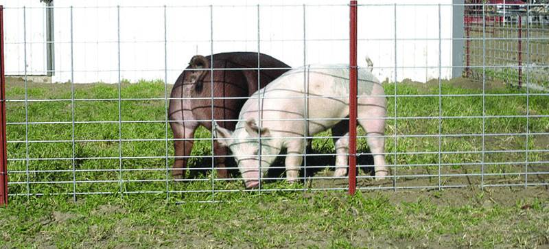 galvanized welded wire fence used for feeding pig