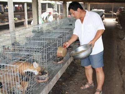 A man is feeding the foxes who live in the welded wire mesh panels cage.