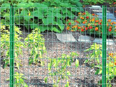 Green Color Welded Wire Mesh Panels Are Installed In The Garden.