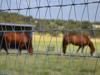 Welded Wire Cattle Fence Protects Cattle In Loafing Area